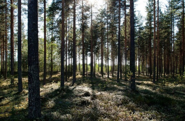 The Finnish Town That Went on a Diet